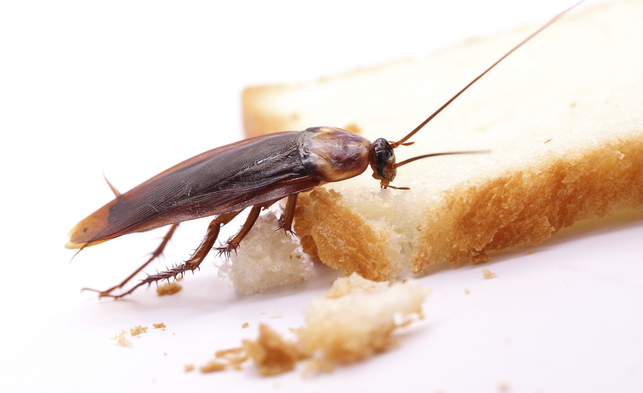 Le pulizie che prevengono gli scarafaggi - GuidaPulizie.it